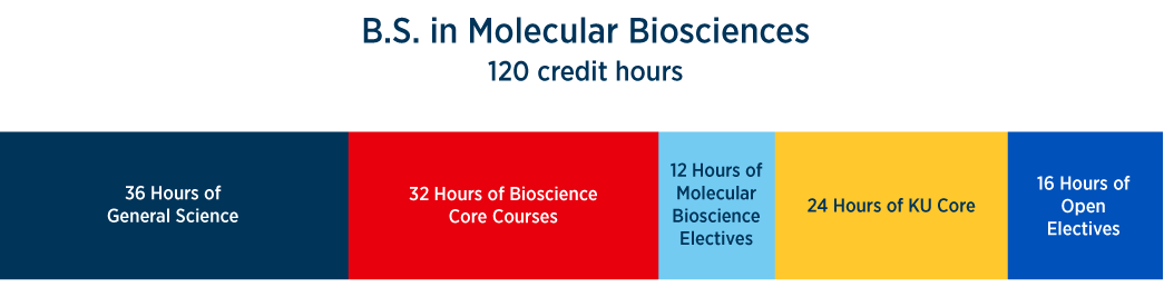 credit hours for KU molecular bioscience degree